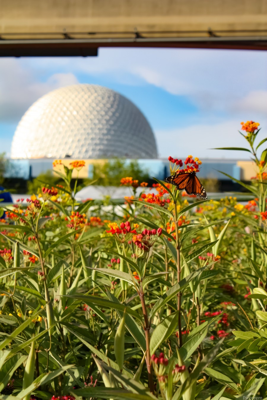 Food and Wine EPCOT  Print
