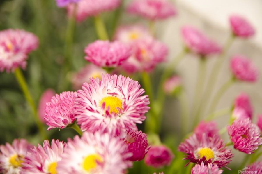 Blooms in the Garden  Print