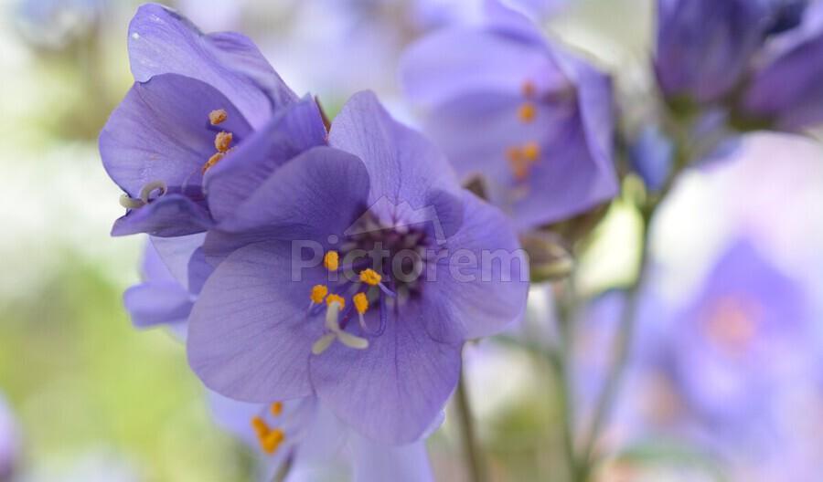 Blue Floral Photograph  Print