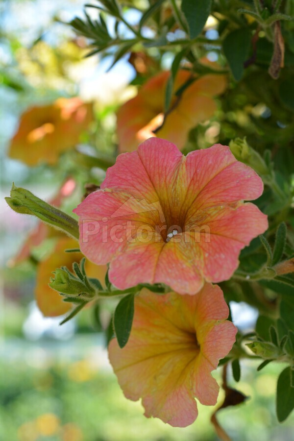 Beautiful orange flowers photograph katherine lindsey photography beautiful orange flowers photograph print izmirmasajfo