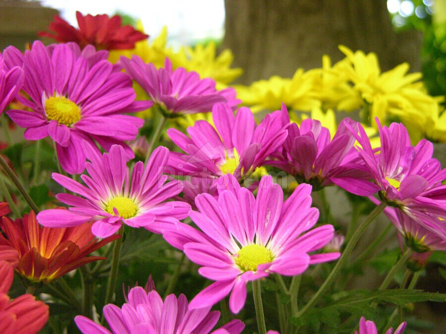 Pink flower garden photograph katherine lindsey photography canvas canvas print mightylinksfo