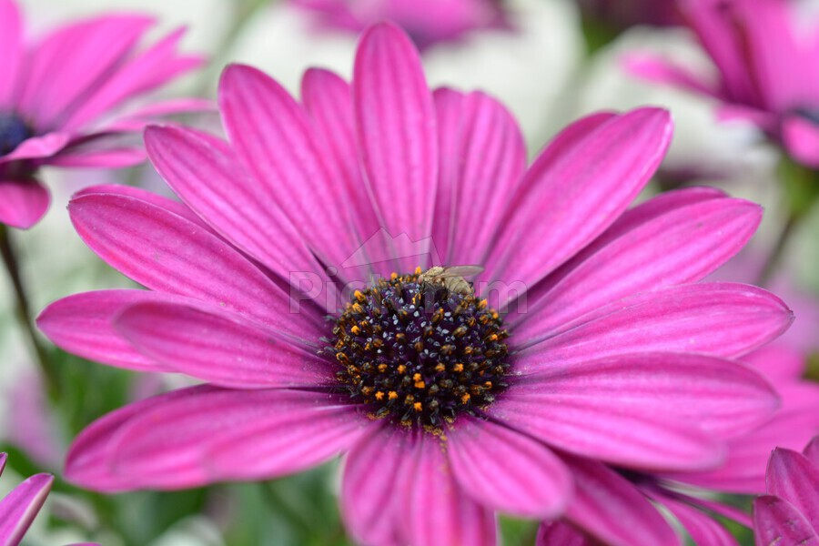 Purple Flower Photograph  Print