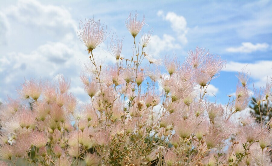 Pink Flora New Mexico Photograph  Print