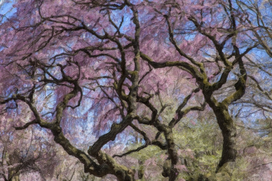 Abstract Cherry Blossom tree  Print