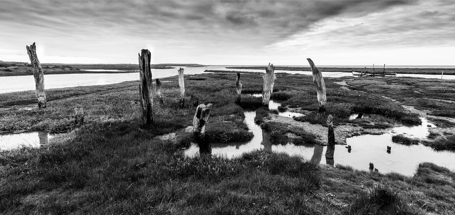 Coastal Marshland  Print
