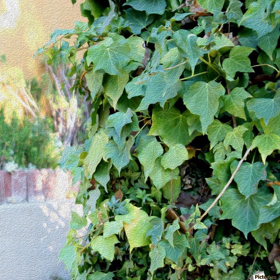 Green Ivy  Print