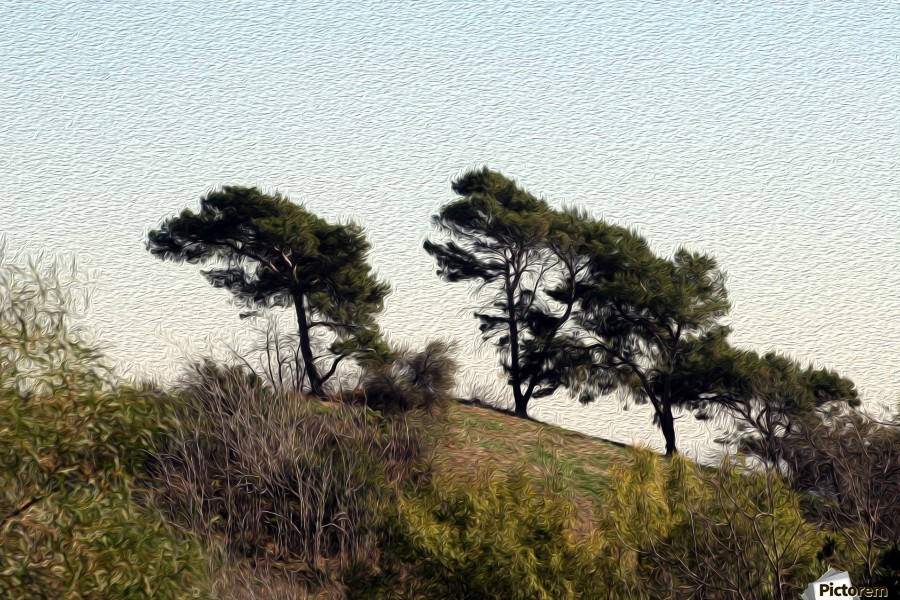 Natural Wind Blown Trees  Print