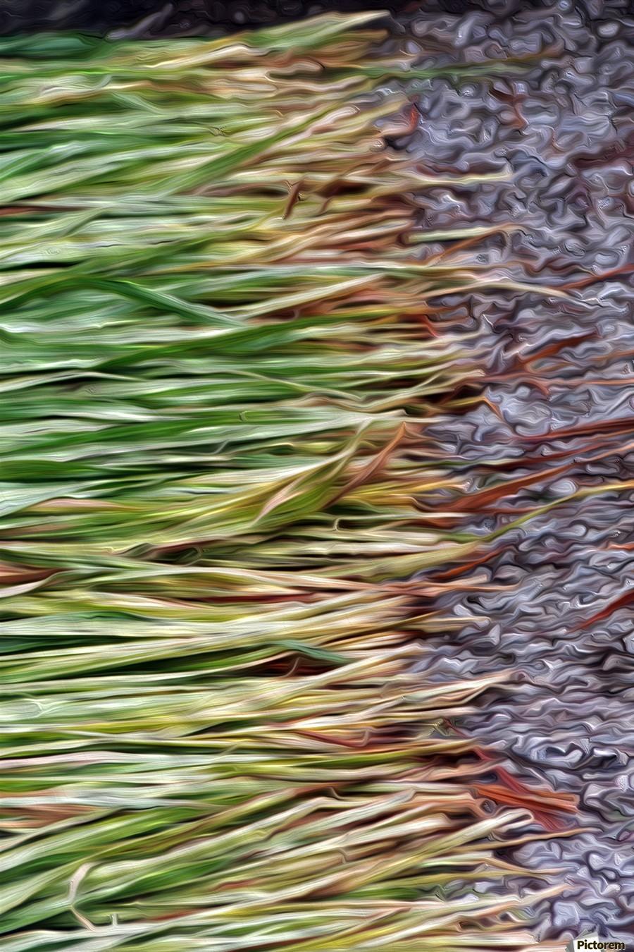 Cut Grass and Pebbles  Print