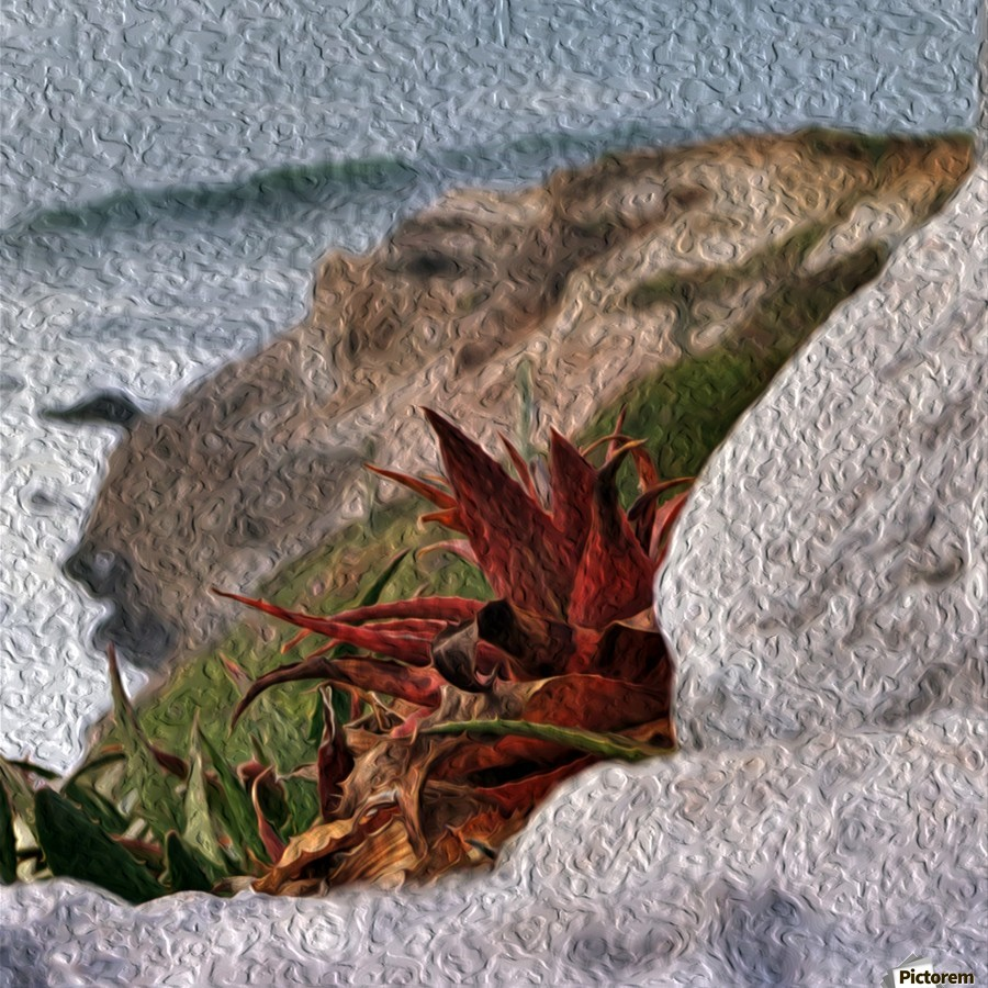 Coastal Red Aloe Vera   Print