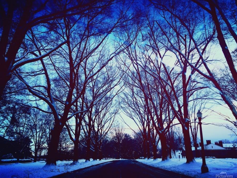 Snowy Delight  Print