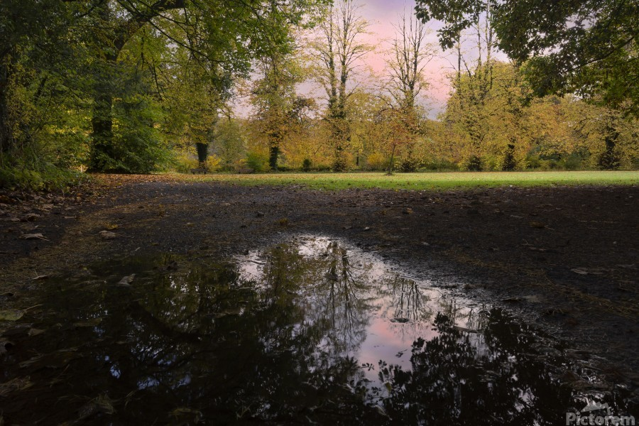Autumn reflections in a field  Print