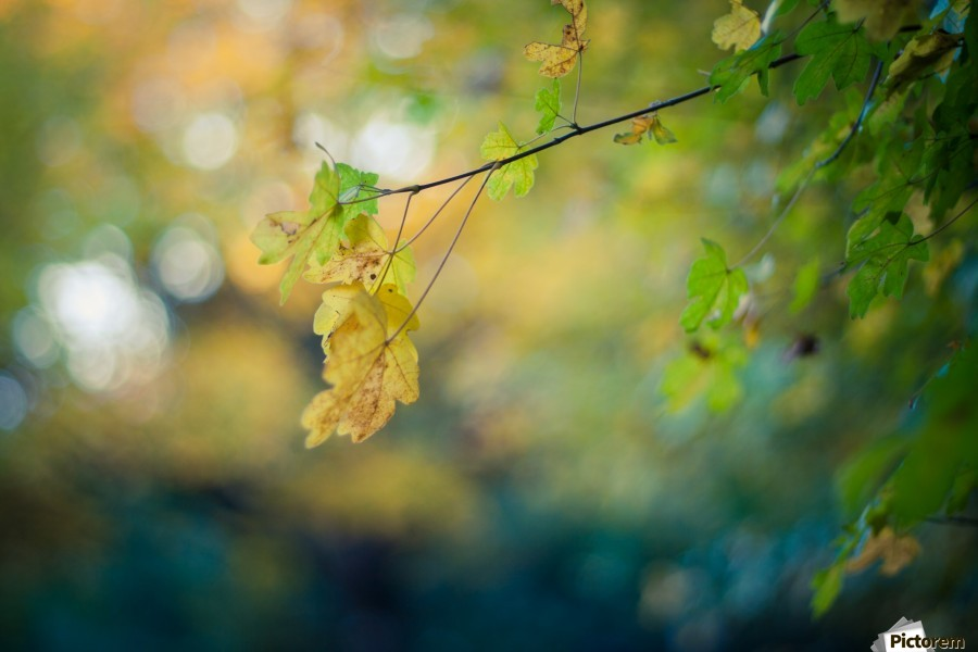 Beautiful autumn background  Print