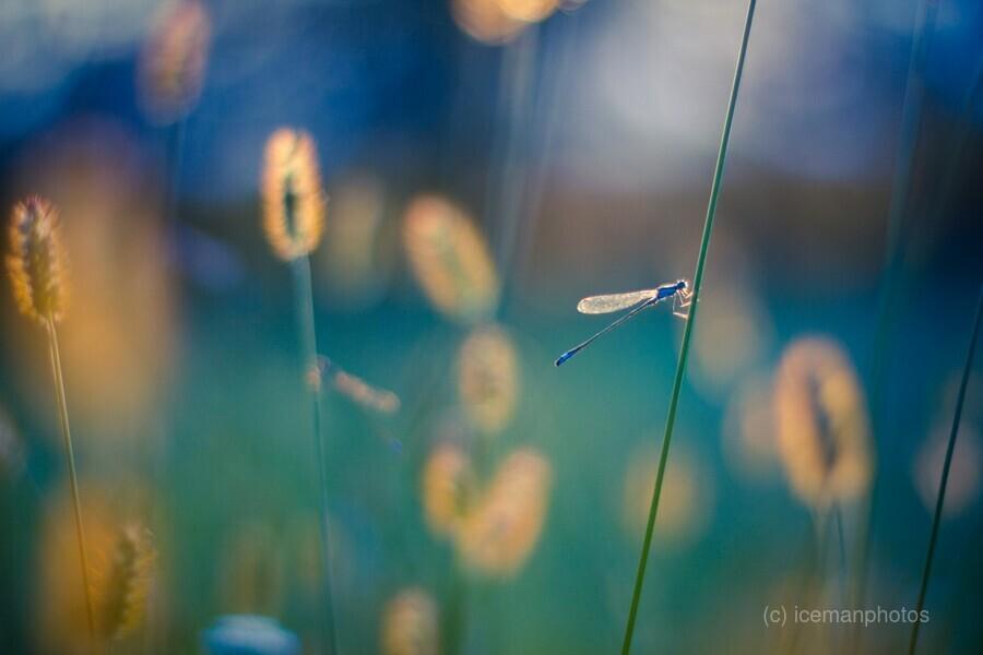 Autumn meadow  Print