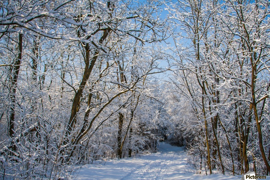 Forest covered with snow  Print