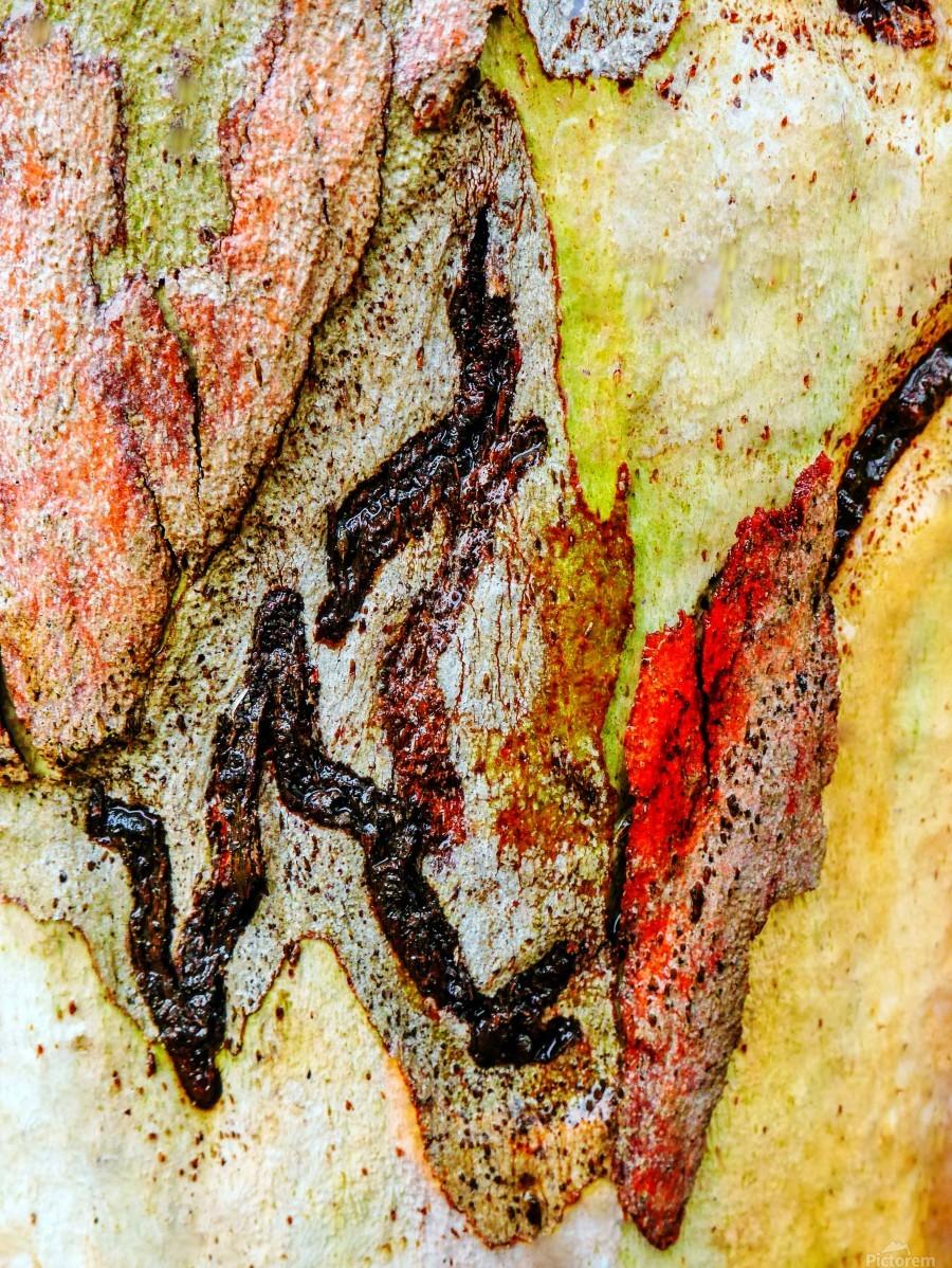 Aussie Gum Tree Bark - 9  Print