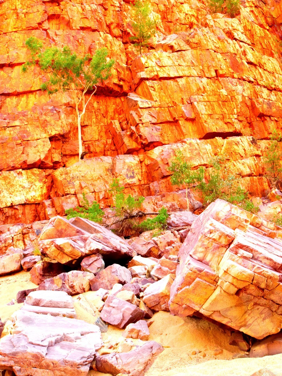 Surviving - Ormiston Gorge  Print