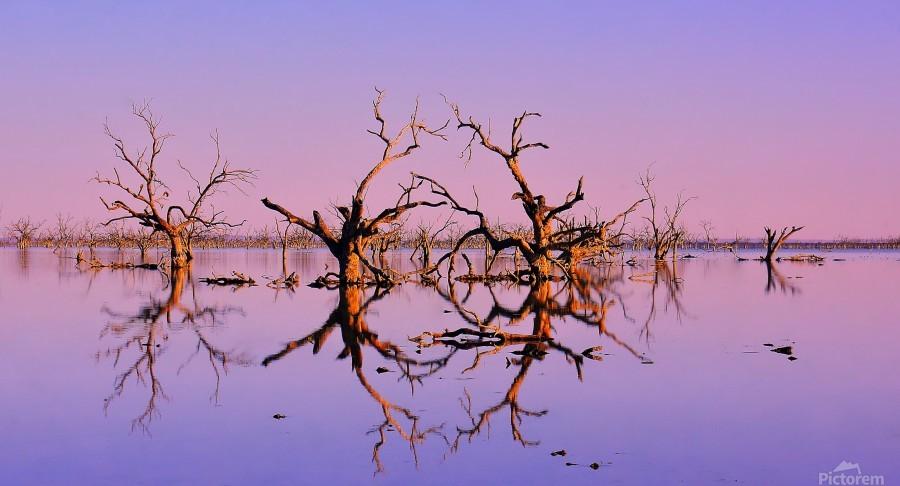Twin Reflections - Pamamaroo Lake  Print
