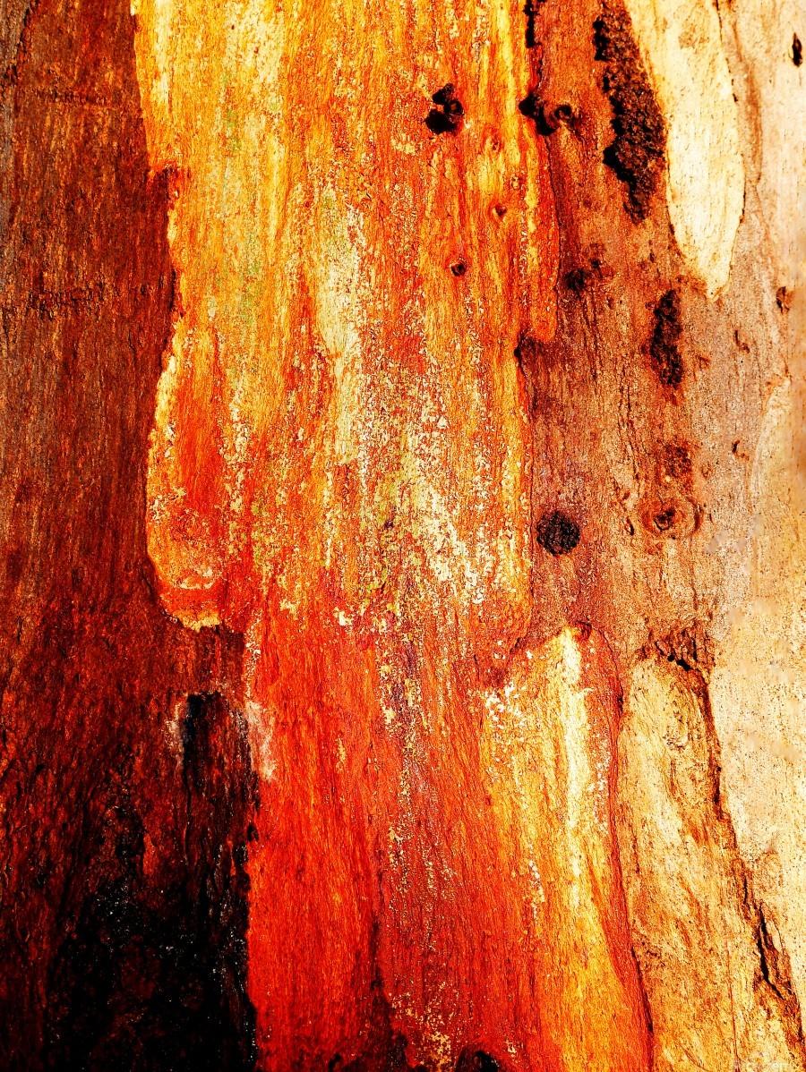 Murray Gum Tree Bark 2  Print