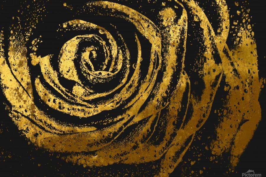 Golden rose  Print