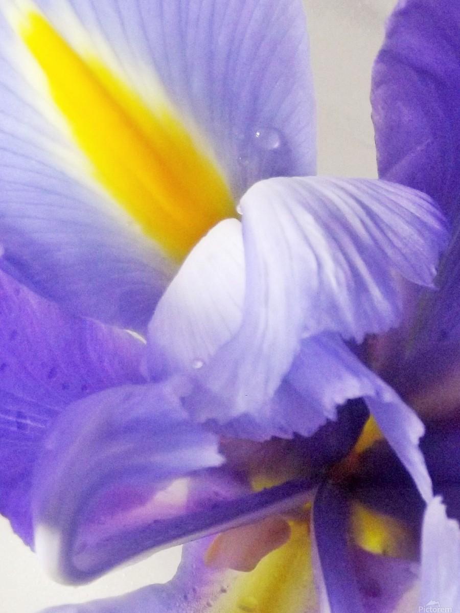 Inner Iris  Print