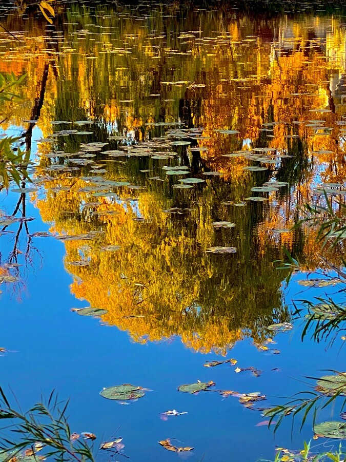 autumn reflection  Print