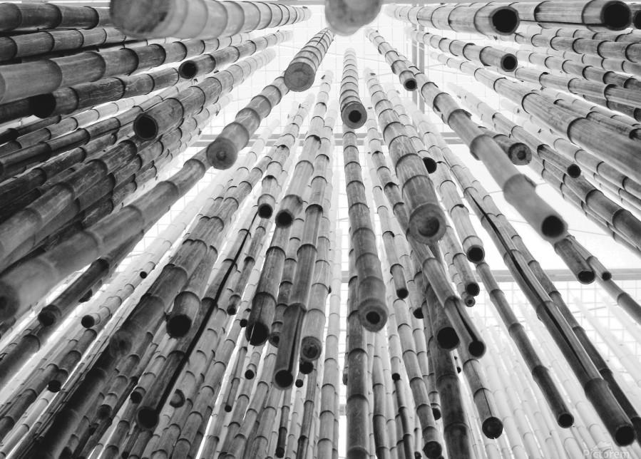 bamboo falling  Print