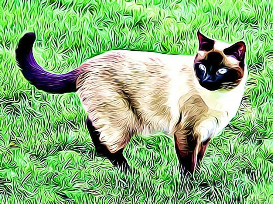 CAT3  Print