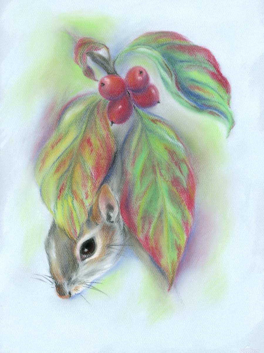 Squirrel in the Autumn Dogwood  Print