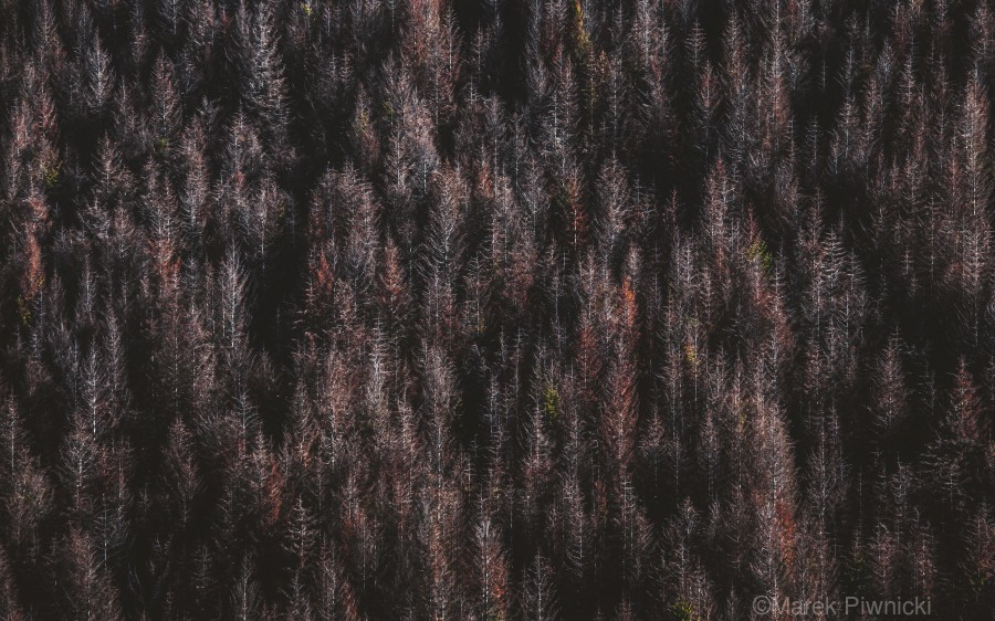 Red forest  Print