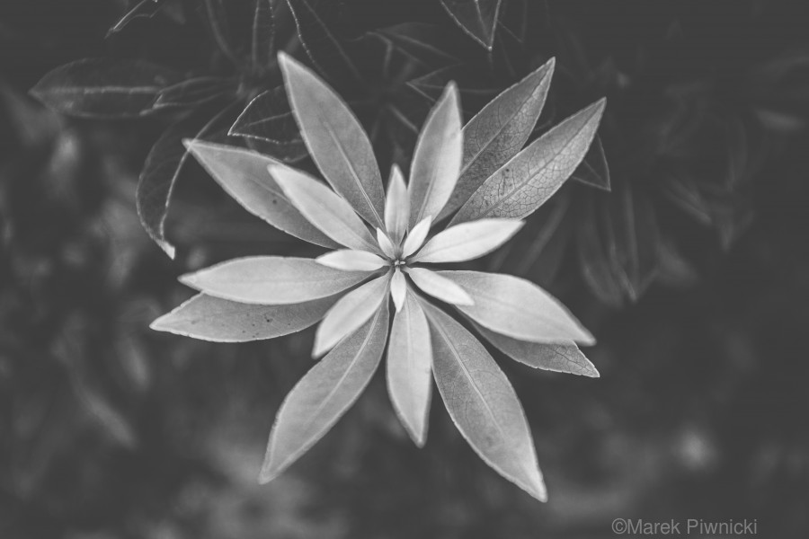 Symmetry of the nature  Print