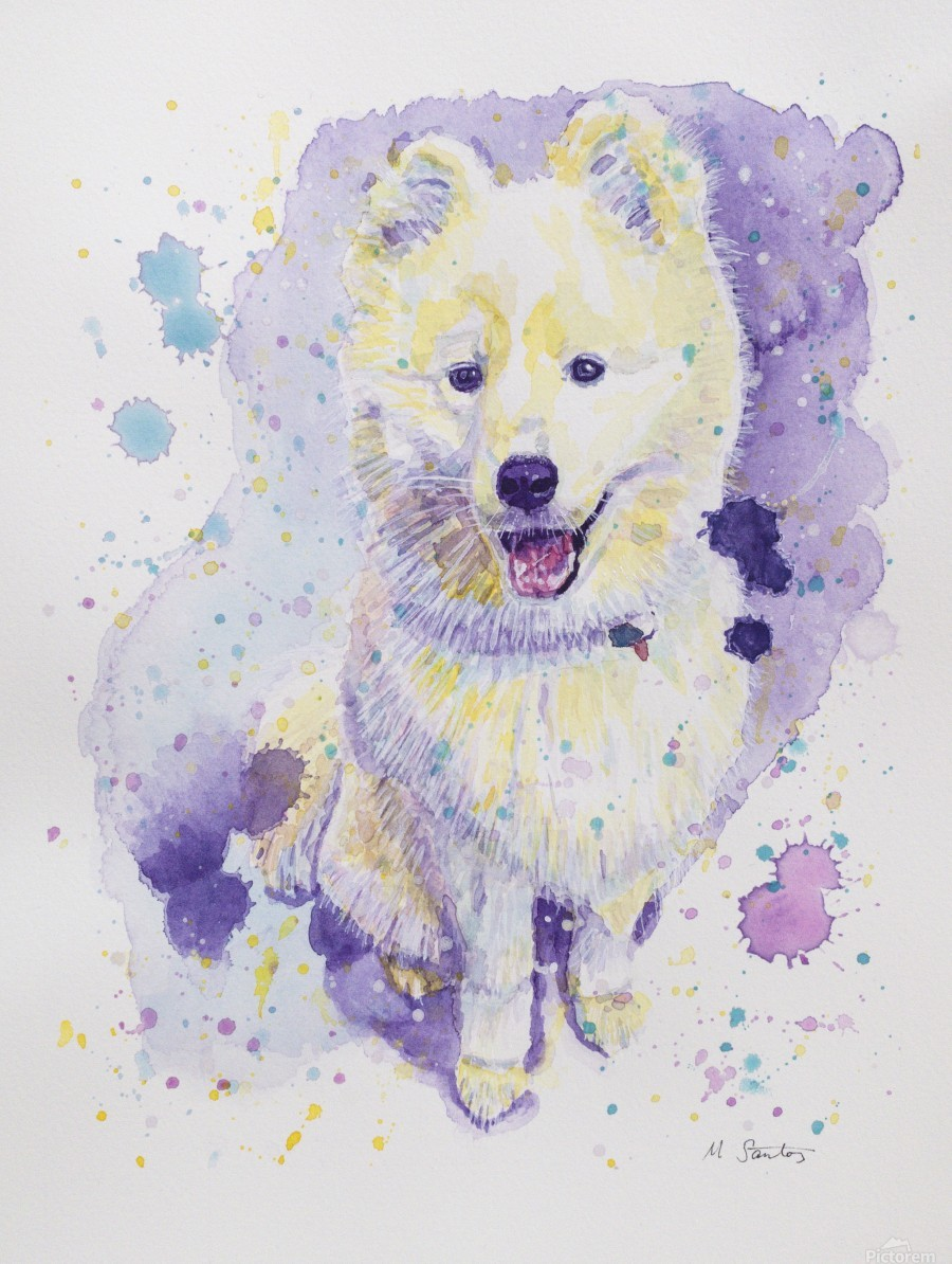 Samoyed Dog - Portrait of Juno  Print
