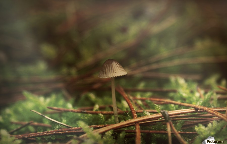 Forest life , Marko Radovanovic , macro, nature, mushroom, little, forest, wet, wild, forest_floor, pine, moss, serbia,