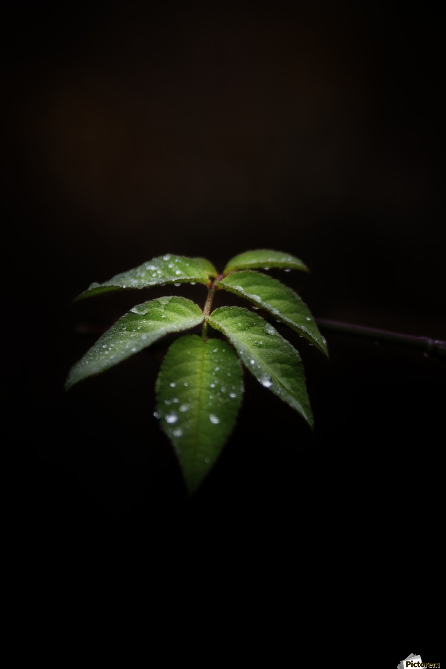 Isolation  , Marko Radovanovic , leaf, leaves, isolated, darkness, alone, thorn, green, center,
