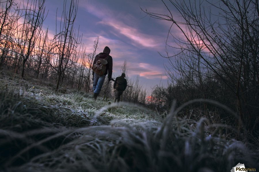 Under cover  , Marko Radovanovic , hunting, pheasant, serbia, morning, hunters, field, frost, lowangle, serbia, redsky, two, guns, early,