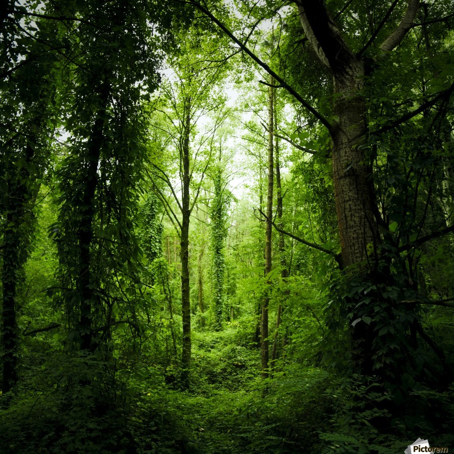 Pure oxygen  , Marko Radovanovic , forest, deep, dark, pure, oxygen, green, serbia, lost, jungle, green_hell, tight, opening, back_ to_nature, wild, liana, fresh, rambler,