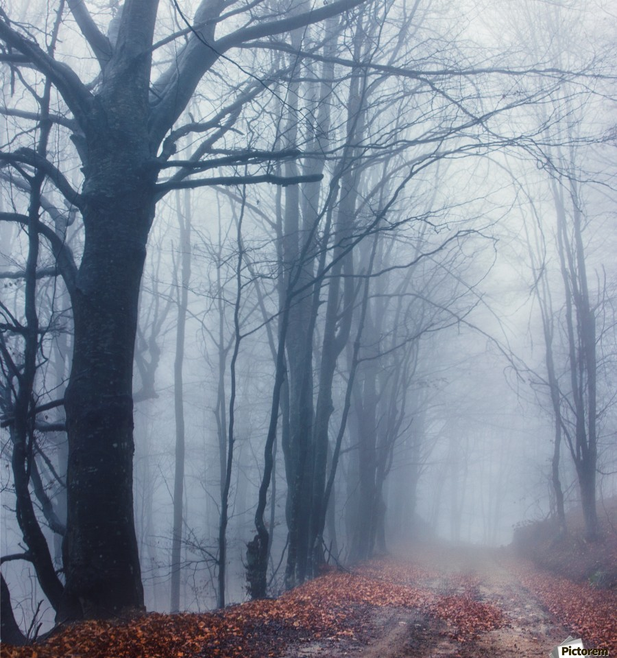 Autumn around us , Marko Radovanovic , autumn, leaves, dead_leaves, forest, serbia, nature, sad, rotten, dead, mountain, road, forest, beech, fog, misty, tree_tops, branches,  moody, fine_art, wild, wet, rain, deep, true, real, beautiful_nature,
