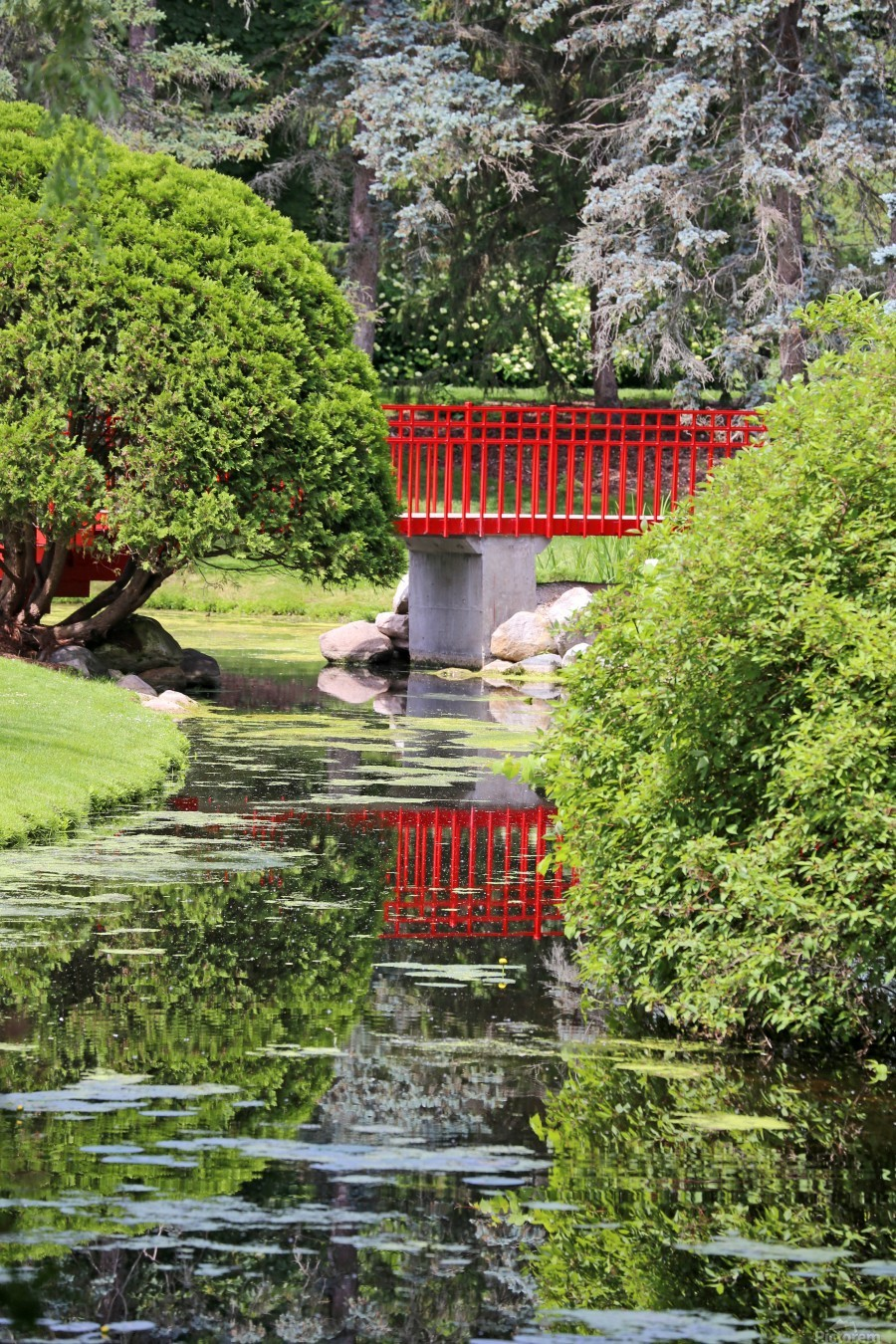 Red Bridge and Reflection 2 Dow Gardens 062618  Print