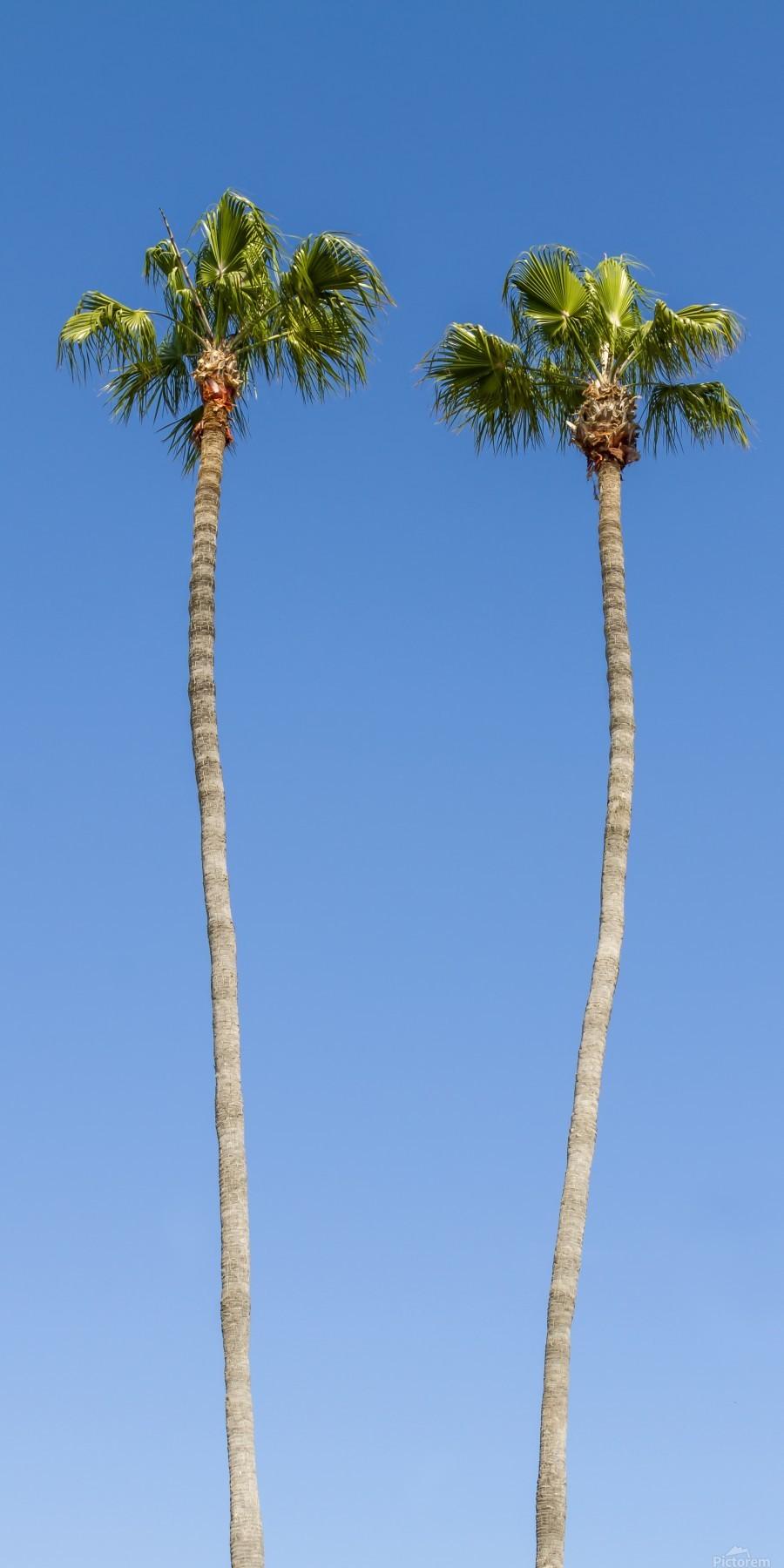 Idyllic Palm trees  Print