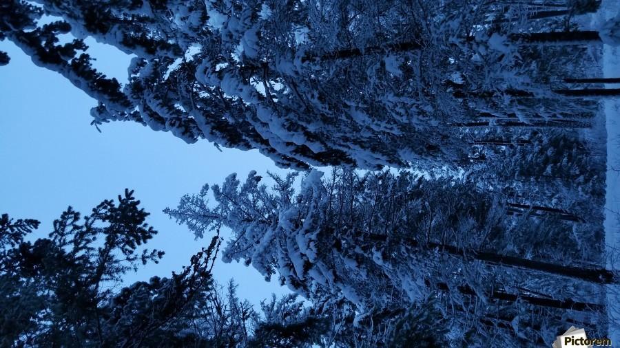 Twilight Woods  Print
