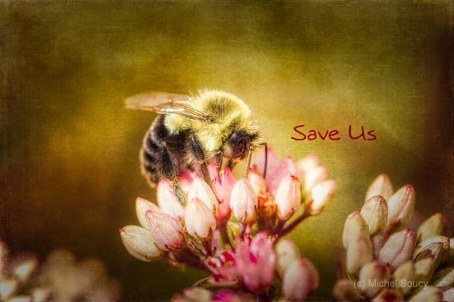 Save Us  Print