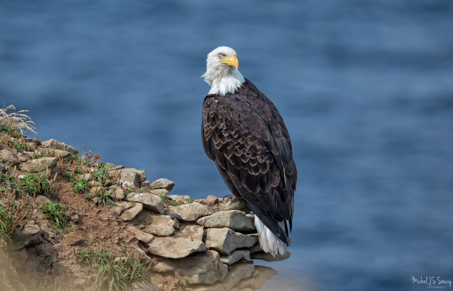 Perched and Proud  Print