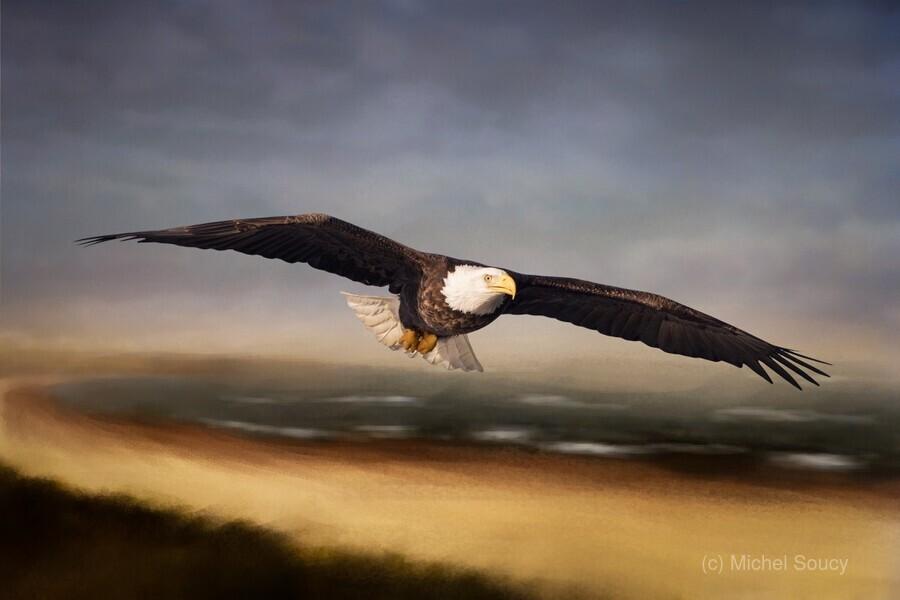 Raptor Skies  Print