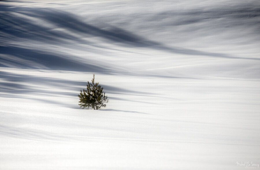 Solitude , Michel Soucy , alone,tree,single,lone,minimalism,one,trees,snow,expanse,field,winter,cold,monotone,serene,serenity,quite,peaceful,solitude,cold,seasonal,white,whites,smooth,michelsoucy,Michel Soucy,