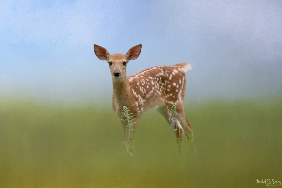 Spotty the Fawn  Print