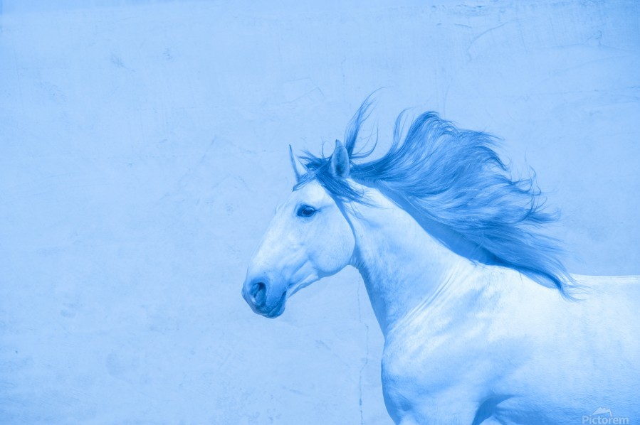 Blue Andalusian Horse 2  Print