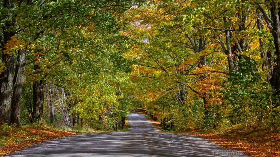 Fall Colors over a Country Road  Print