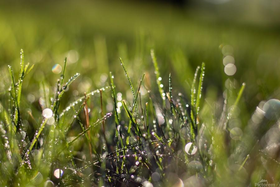 Dew Drops  Print