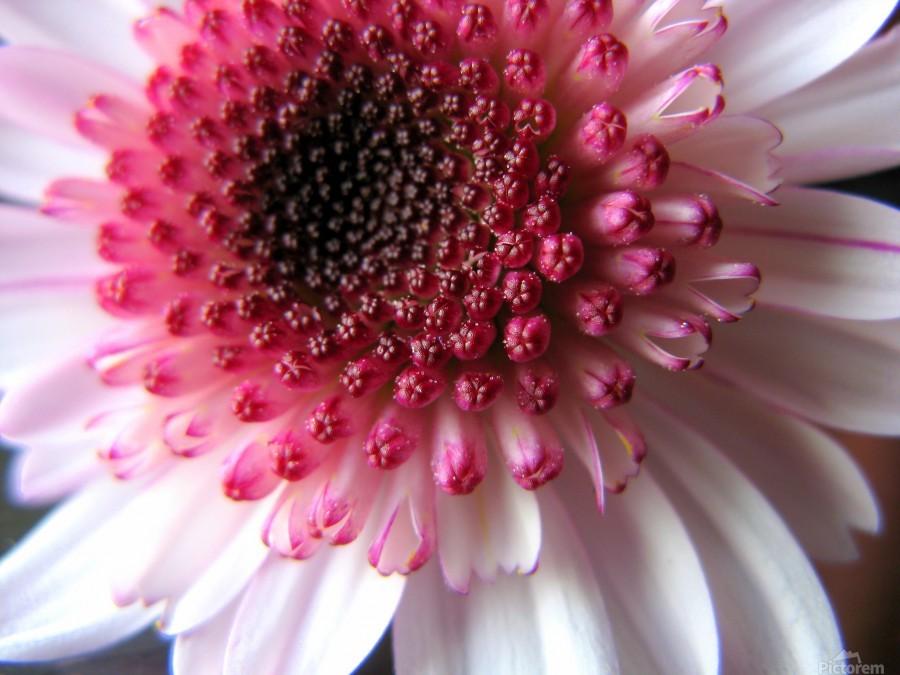 Floral Delicacy  Print