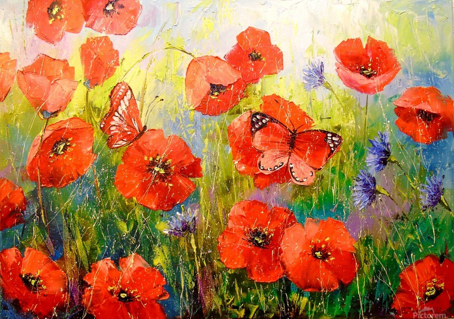 Poppies and butterflies  Print
