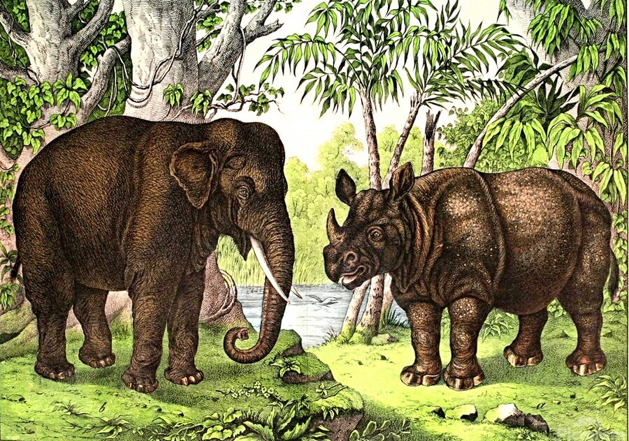 Elephant And Rhinoceros  Print